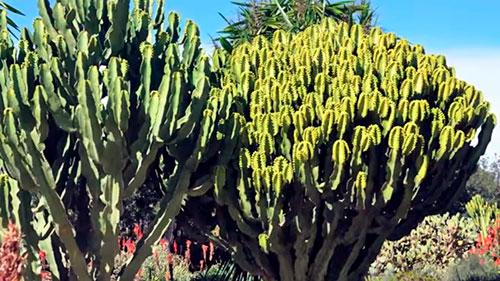 Qué hacer en Almería, descúbrela Parque del Boticario