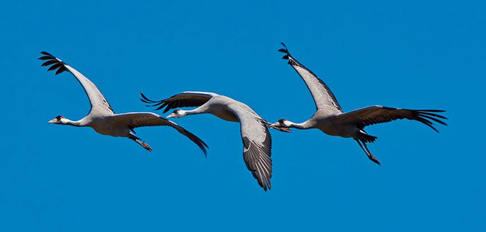 XX Concurso Ornitológico Provincial Aodca