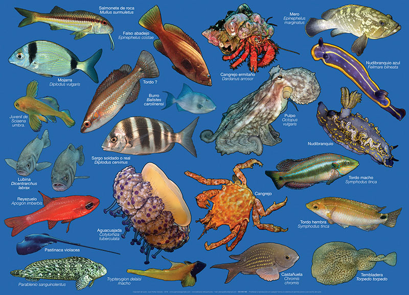 Especies marinas en Cabo de Gata
