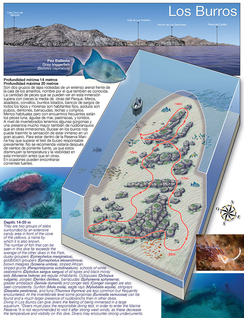 Buceo en Cabo de Gata, Almería. Los Burros