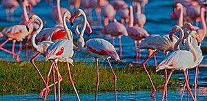 Ruta 4x4 Cabo de Gata, Salinas, Humedales, Aves y Cine
