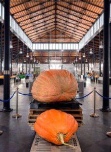 La calabaza más grande de Andalucía en el Mercado Central