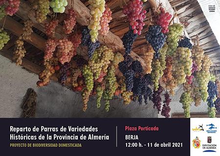 Reparto de parras de variedades históricas de la provincia de Almería